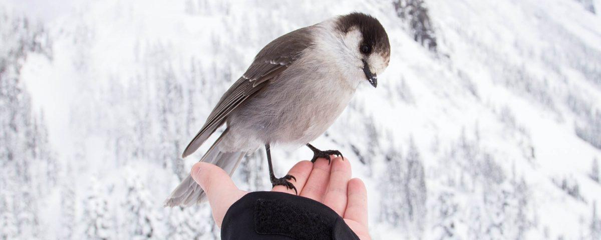 hiver en douceur